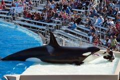San Diego SeaWorld Stock Image