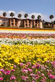 Southern California springtime flowers Royalty Free Stock Photography