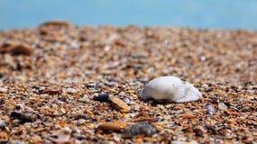 San Diego strand fotografering för bildbyråer