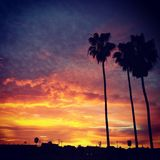San Diego Sunset with Palm Trees. Red Sky sunset with trees Royalty Free Stock Image