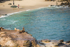San Diego, USA - December 7,2015: One seal sunbathing on cliff at La Jolla cove with people standing on the beach Royalty Free Stock Images