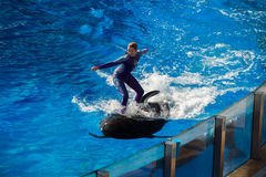 Free SAN DIEGO, USA - NOVEMBER, 15 2015 - The Dolphin Show At Sea World Royalty Free Stock Photography - 64107307