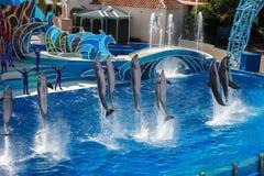 SAN DIEGO, USA - NOVEMBER, 15 2015 - die Delphinshow an der Seewelt Stockfotografie