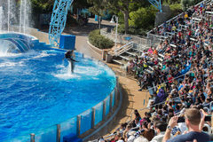 SAN DIEGO, USA - NOVEMBER, 15 2015 - The dolphin show at Sea World Stock Images