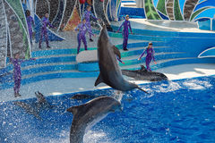SAN DIEGO, USA - NOVEMBER, 15 2015 - The dolphin show at Sea World Stock Photo