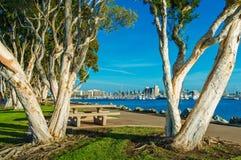 San Diego Waterfront Park. San Diego Waterfront Public Park, Marina and the San Diego Skyline. California, United States royalty free stock image