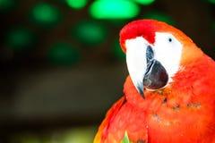 San Diego Zoo Animal. Bird Stock Photography