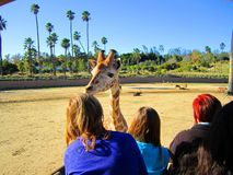 San Diego Zoo, people and giraffe, tourism Stock Photos