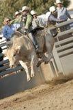 San Dimas Bull Riding. SAN DIMAS, CA - OCTOBER 2: Cowboy Kyle Joslin competes in the Bull Riding event at the San Dimas Rodeo in San Dimas on October 2, 2010 Royalty Free Stock Image