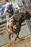 San Dimas Bull Riding. SAN DIMAS, CA - OCTOBER 2: Cowboy Chris Azevedo competes in the Bull Riding event at the San Dimas Rodeo on October 2, 2010 in San Dimas Royalty Free Stock Photos