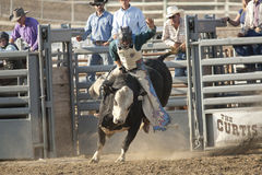 San Dimas Bull Riding. SAN DIMAS, CA - OCTOBER 2: Cowboy Josh Daries competes in the Bull Riding event at the San Dimas Rodeo on October 2, 2010 in San Dimas, CA Royalty Free Stock Photo