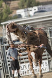 San Dimas Rodeo Saddle Bronc Royalty Free Stock Images