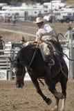 San Dimas Rodeo Saddle Bronc Stock Image