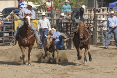 San Dimas Rodeo Steer Wrestling 4 Royalty Free Stock Image