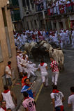 San fermin 2013 Stock Photography