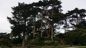 San Francisco Fotografia de Stock Royalty Free