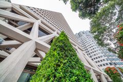 SAN FRANCISCO - AUGUST 6, 2017: Transamerica Building with trees. This is a famous city icon Royalty Free Stock Photo