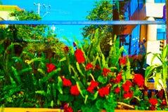 Beautiful flower. San Francisco bay area ocean view shoreline Royalty Free Stock Photography