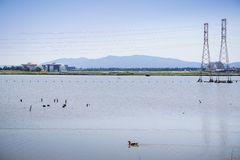 Ландшафт на юге San Francisco Bay, взгляде к авиаполю от следа залива, Mt Umunhum Moffett на заднем плане; Sunnyvale, стоковые изображения rf