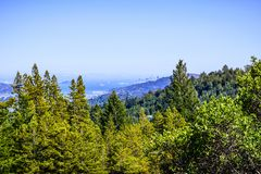 Canopy view of the forests of Mt Tamalpais State Park; stock image