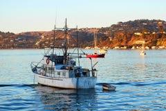 San Francisco Bay: Vida en el agua 1 Fotos de archivo libres de regalías