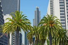 San Francisco, CA Royalty Free Stock Photography