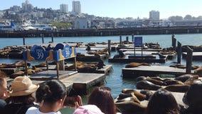 Pier 39 sea lions San Francisco royalty free stock photos