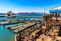 SAN FRANCISCO, CA - SEPTEMBER 20, 2015: Tourists and sea lions at Pier 39, San Francisco. Pier 39 is one of the famous landmarks o Stock Photography