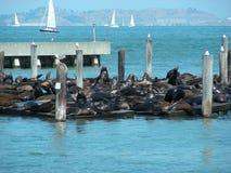 San Francisco - Califórnia, EUA Fotos de Stock