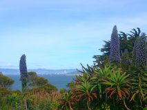 San Francisco, Californië stock afbeelding