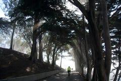 SAN FRANCISCO, CALIFORNIA, ESTADOS UNIDOS - 11 de noviembre de 2018: Rayos ligeros a través de árboles en el parque del albañil d imagen de archivo libre de regalías