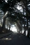 SAN FRANCISCO, CALIFORNIA, ESTADOS UNIDOS - 11 de noviembre de 2018: Rayos ligeros a través de árboles en el parque del albañil d foto de archivo libre de regalías