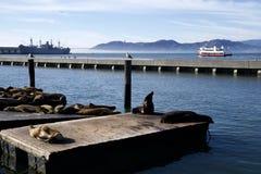 SAN FRANCISCO, CALIFORNIA, ESTADOS UNIDOS - 25 de noviembre de 2018: Sello o leones marinos en el embarcadero 39 de San Francisco imagenes de archivo