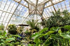 San Francisco Conservatory dei fiori interni fotografia stock
