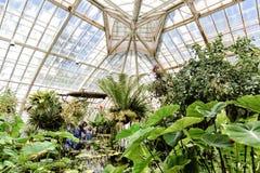 San Francisco Conservatory von den Blumen Innen stockbild