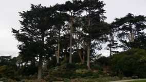 San Francisco. Forest tall trees Royalty Free Stock Photography