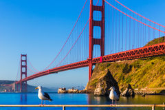 San Francisco Golden Gate Bridge seagull California Royalty Free Stock Photo
