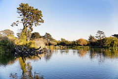 San Francisco Golden Gate Park. View of Stow lake at San Francisco Golden Gate Park Royalty Free Stock Image
