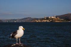San Francisco Jail Bird Stock Photography