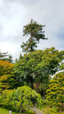 San Francisco Japanese Garden Immagine Stock