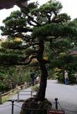 San Francisco. Japanese garden morning Royalty Free Stock Images