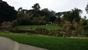 San Francisco. Japanese garden morning royalty free stock photography