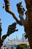 San Francisco lombard crooked trees Stock Images