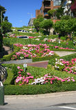 San francisco lombardu street obraz royalty free
