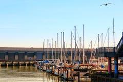 San Francisco Marina Yacht Harbor på solnedgången royaltyfri bild