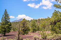 San Francisco Peaks Stock Photos