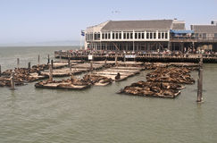San Francisco - Pier 39. This is a picture of San Francisco's Pier 39 Royalty Free Stock Photography