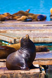 San Francisco Pier 39 lighthouse and seals California Stock Photo