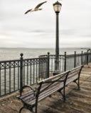 San Francisco Sea Gull auf Pier 7 lizenzfreies stockbild