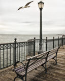 San Francisco Sea Gull sur le pilier 7 Image libre de droits